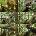 CELTIBERO - Couteau de chasse / Outdoor / Survie - Manche en bois de cocobolo / Micarta - Lame inox MOVA-58 avec étui de transport. Pierre d'affûtage et allume feu (firesteel) incluse. Fabriqué en Espagne. de la marque CDS-Survival image 4 produit